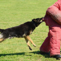 A dog bites a kid