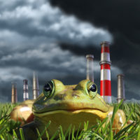 Pollution and a frog in the grass