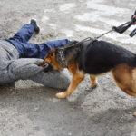 Dog bites a boy on the floor